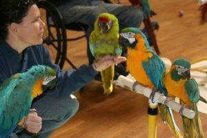 Debbie with Macaws